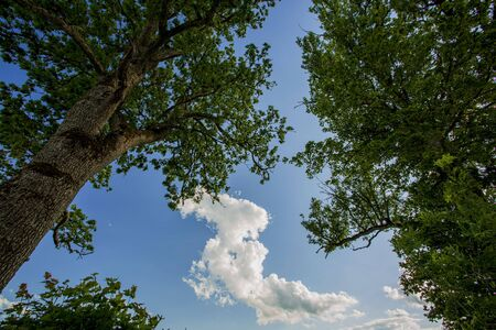 Blue sky and clouds background. Gorgeous nature backgrounds.