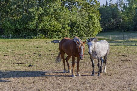 Group of colorful horses on rest in field. Animals concept. Beautiful animals backgrounds.