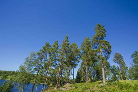 Gorgeous view on the lake through tall trees. Gorgeous nature landscape background. Sweden, Europe. Stock Photo