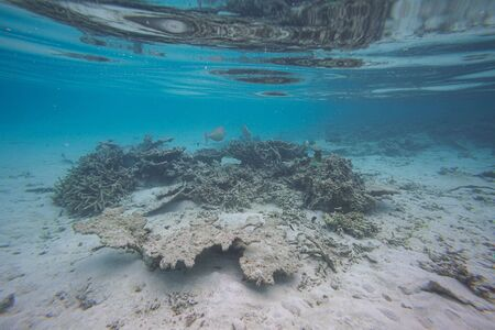 Gorgeous view of underwater world. Snorkeling.Maldives, Indian Ocean. Dead reef corals and beautiful fishes in blue water.