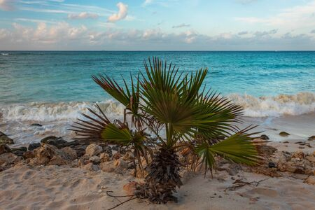 Gorgeous view of cute young palm tree on turquoise water of Atlantic ocean and blue sky with snow white clouds background. Aruba island. Caribbean. Imagens