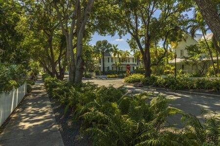 Beautiful view of town street landscape. White buildings between green trees on blue sky background. Key West. Florida USA