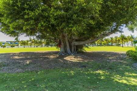 Close up view of huge green tree isolated. Gorgeous green nature backgrounds. Imagens