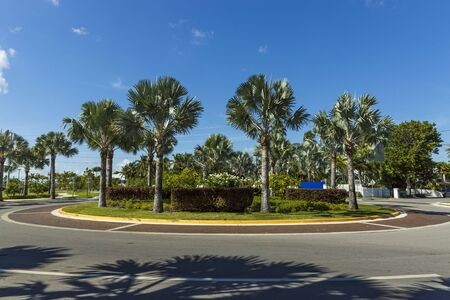 Beautiful view of landscape with round road decorated with green palm trees and plants.