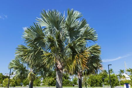 Beautiful view of palm tree on clear blue sky background. Beautiful nature backgrounds.
