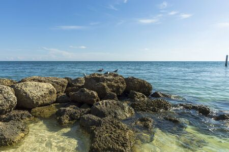 Gorgeous view of seagulls on rocky coast. Blue water surface merging with light blue sky on background. Imagens