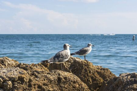 Close up view of cute seagulls standing on rocks with blue ocean water on background. Imagens