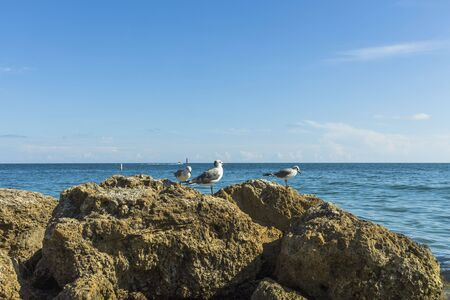View of cute seagulls standing on rocks with blue ocean water on background. Imagens