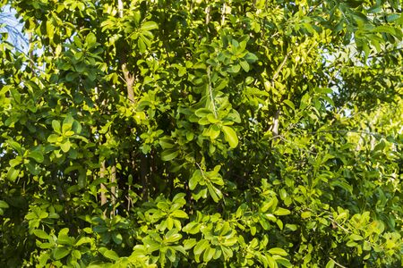 Close up view of juicy green plant. Beautiful green natural backgrounds. Imagens