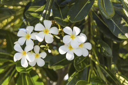 Close up view of beautiful white flowers on green leafs background. Natural backgrounds. Imagens