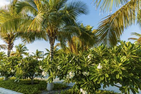 Gorgeous view of green plants with white flowers under green palm trees. Beautiful green nature backgrounts.
