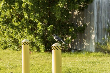 Cute little bird on white fence post on green plants backround. Beautiful green summer backgrounds. Reklamní fotografie