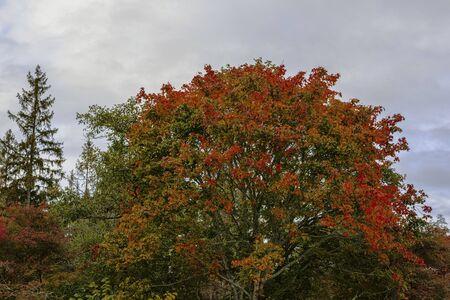 Gorgeous autumn colorful nature landscape view. Beautiful colorful nature backgrounds. Imagens