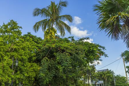 Beautiful combination of green tropical trees and plants on blue sky background. Gorgeous nature landscape backgrounds.