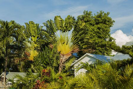 Beautiful view of small houses surrounded of green palm trees and plants. Key West. Florida USA
