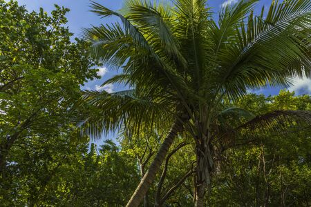 Beautiful view on blue sky through green tops of tropical trees. Beautiful green nature backgrounds.