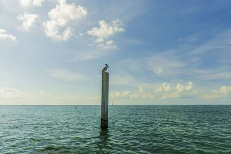 Pelican sitting on logs. Turquoise water and blue sky background. Caribbean. Key West, Florida. USA Amazing nature background. Imagens