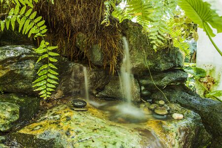 Beautiful stream in thickets of green fern. Gorgeous natural backgrounds.