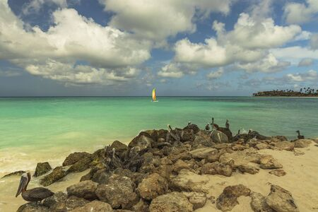Beautiful view of coast line of Atlantic ocean on Aruba island. Pelicans sitting on rock. Turquoise water and blue sky background. Caribbean. Amazing nature background Stok Fotoğraf