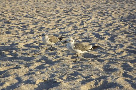 Few small cute Gulls on Miami South Beach. Gorgeous nature background.