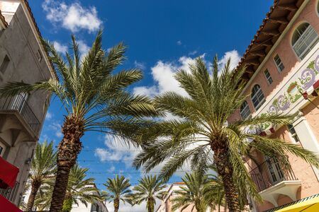 Beautiful colorful buildings and palm trees on blue sky background. Architecture concept.