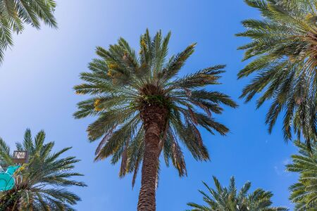 Gorgeous tropical landscape view. View of green palm trees on blue sky background Miami south beach. Gorgeous nature landscape background.