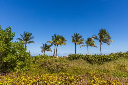 Gorgeous tropical landscape view. Green palm trees and plants on coast line on blue sky background Miami south beach. Gorgeous nature landscape background.