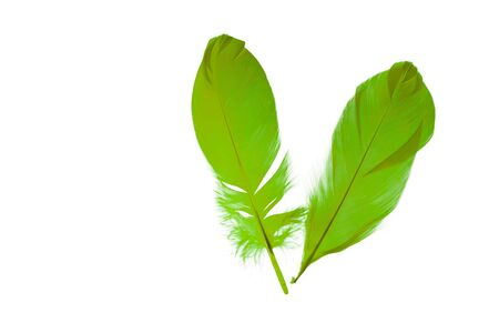 Close up view of chartreuse feathers isolated on white background. Beautiful colorful backgrounds. 스톡 콘텐츠
