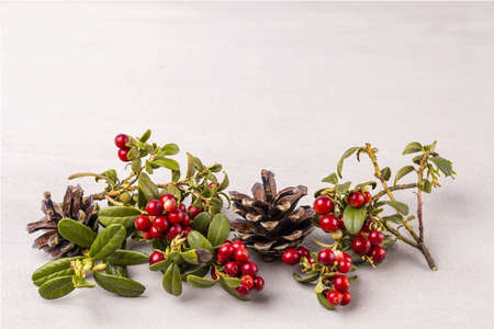 Close up view of red rowanberry branch and fir cones isolated on greey background.