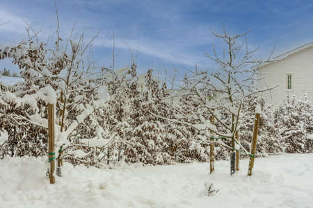 View of winter landscape of private area. Trees and bushes covered with snow. Beautiful white villas on background.