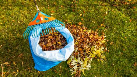 Fallen leaves in and rake on still green grass background. Autumn landscape. Fall season concept. Stok Fotoğraf