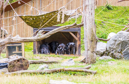 View of group of black monkeys in aviary. Beautiful animals backgrounds.
