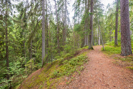 Beautiful nature forest landscape view. Path between tall trees. Sweden. Stok Fotoğraf
