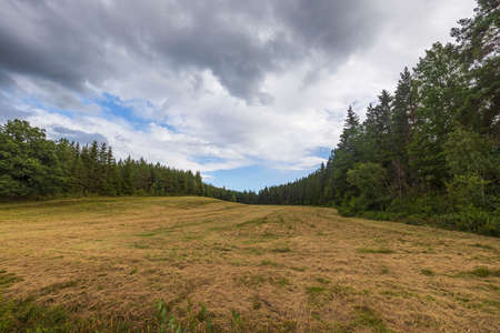 Beautiful summer nature landscape view. Green grass field on front nature landscape view. Sweden.