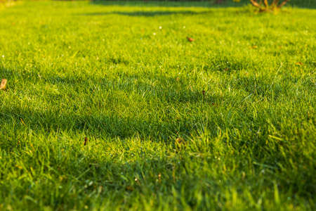 Beautiful view of front yard of private garden. Green grass lawn. Beautiful backgrounds. Sweden.