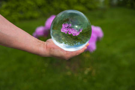 Close up macro view of hand holding crystal ball with inverted image of blooming pink rhododendron. Sweden.