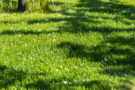 Beautiful nature landscape view. Tree shadows on green grass lawn. Sweden.