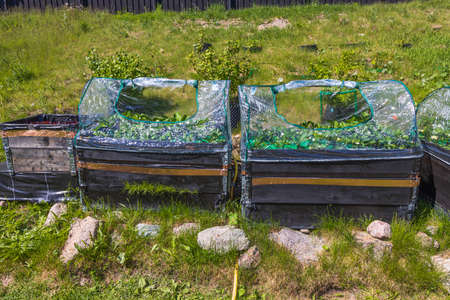 View of strawberry bed with Cooper tape against singles. Sweden.