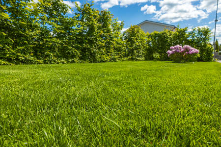Beautiful nature landscape view. Green lawn, bushes and rhododendron flower on blue sky with white clouds background.
