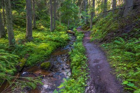 Beautiful summer nature landscape view. Small stream in green forest. Sweden.