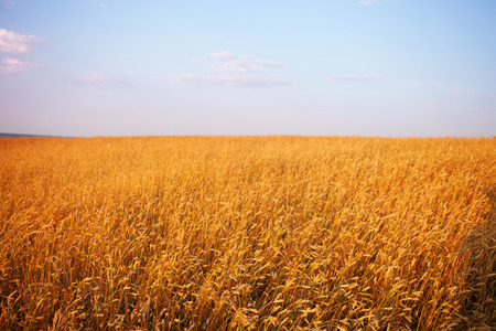 paisajes: campo al atardecer