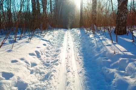 ski run: ski run