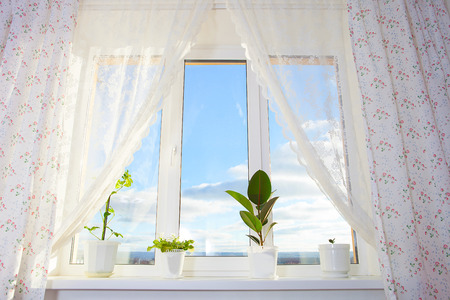 using senses: Window with plants. Schefflera , ficus , violet. Stock Photo