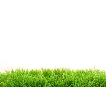 Grass closeup Фото со стока