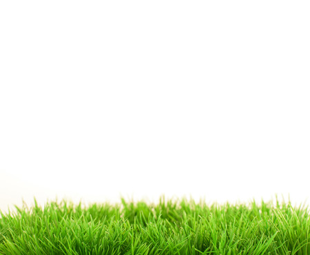 Grass closeup 版權商用圖片