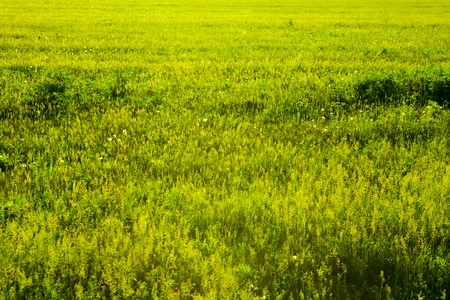 copyspace: A patch of green field good for background, texture, copyspace.