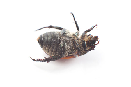 wingless: Insect