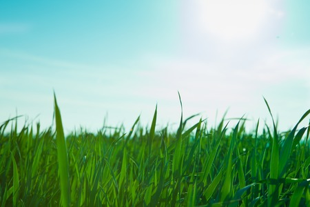 humus soil: fresh lawn in the morning