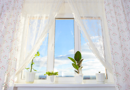 using senses: curtain Window with plants
