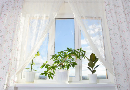 window sill: window and curtain with plants in the room